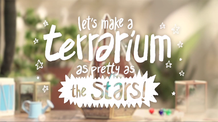 Terrarium as Pretty as the Stars